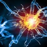Принцип работы клеток нашего тела
