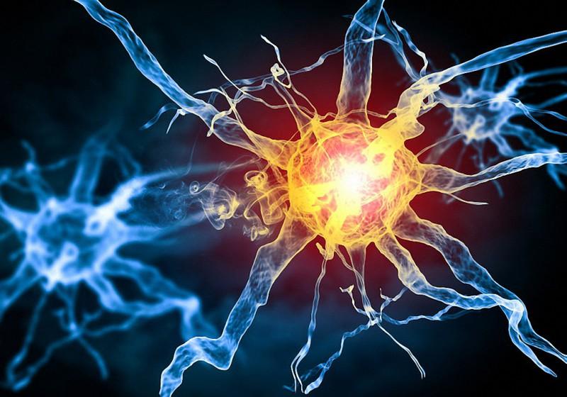 функции и роль клеток тела